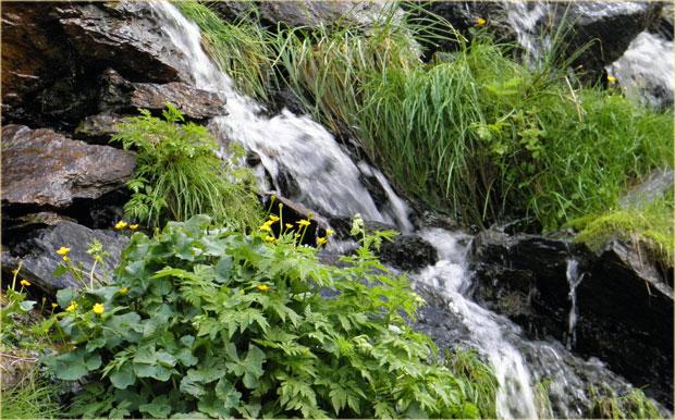 1334_montcalm_natuerliches_mineralwasser_10